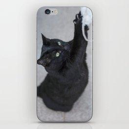 Cat playing iPhone Skin