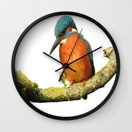 Stunning Kingfisher Vector Wall Clock