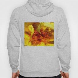 Pollen Macro Photography By Saribelle Rodriguez Hoody