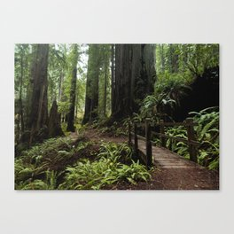 Redwood Roaming - California Wanderlust Canvas Print
