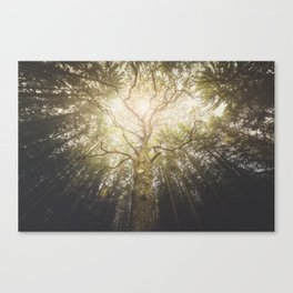 I found a tree in the forest Canvas Print
