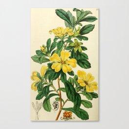 Edwards' botanical register Canvas Print
