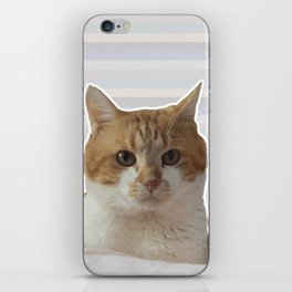 Red cat on a striped background. iPhone Skin
