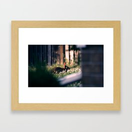 Rabbit At Dusk Framed Art Print