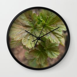 Currant Spring Leaves Wall Clock
