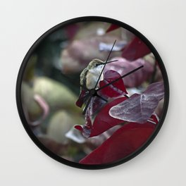 Hummingbird Hiding in Red Bud Tree Wall Clock