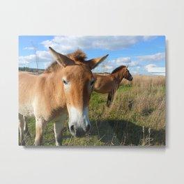 Przewalski horses 02 Metal Print