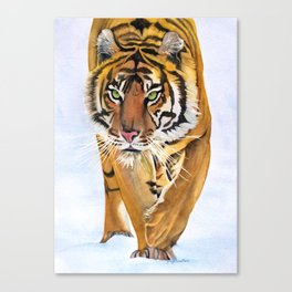 Walking Tiger Canvas Print