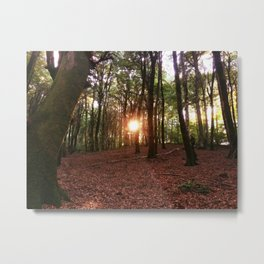 Faggeta's sunset Metal Print