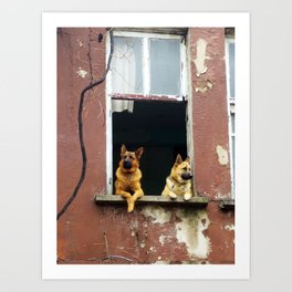 dog's voyeur Art Print