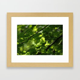 Woodland Green Framed Art Print