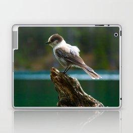Grey Jay at Joffre Lakes Laptop & iPad Skin