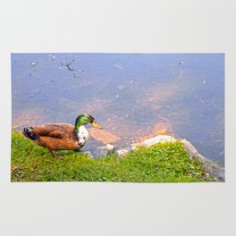 Duck Going for a Swim Rug