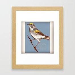 Golden-Winged Warbler Framed Art Print