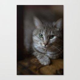 phil cat Canvas Print