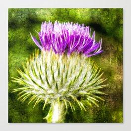 Flower of Scotland Oil Paint effect. Canvas Print