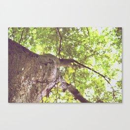 10. Bark Canvas Print