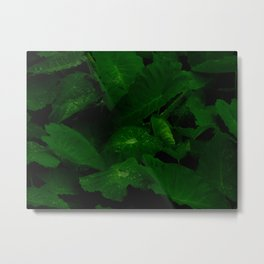 Tropical Anthurium Leaves With Rain Water Droplets In A Dark Background Metal Print