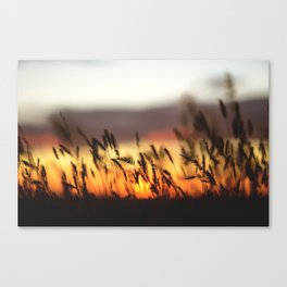 Goldenfield and A Sunset Canvas Print