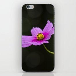 pink Cosmea summer flower iPhone Skin