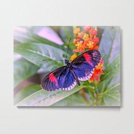 Red Postman Butterfly Metal Print
