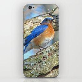 Bluebird in Tree iPhone Skin
