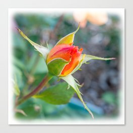 Rose Bud - Tea with Roses Canvas Print