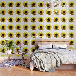 Rudbeckia Blossom Wallpaper