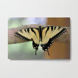 Le Papillon - Papilio Glaucus Metal Print