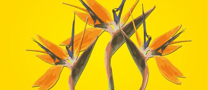 strelitzia - Bird of Paradise Flowers II Coffee Mug