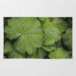 Water drops on fresh green Leaf Rug
