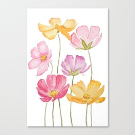 colorful cosmos flower Canvas Print