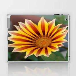 Single Flower Close Up Gazania Red Stripe Laptop & iPad Skin