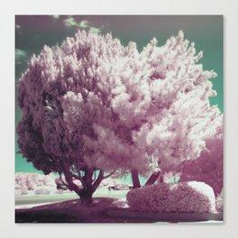 Bizarre Blossom Canvas Print