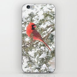 Cardinal on a Snowy Cedar Branch (v) iPhone Skin