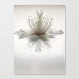 floating into the light Canvas Print
