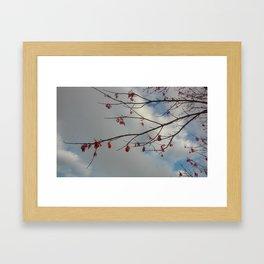 spring time buds Framed Art Print