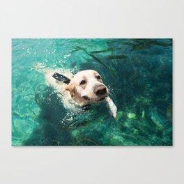 Dog swimming Canvas Print