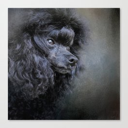 Snack Spotter - Black Toy Poodle Canvas Print