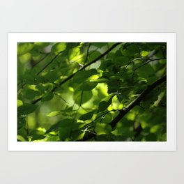 Woodland Green Art Print