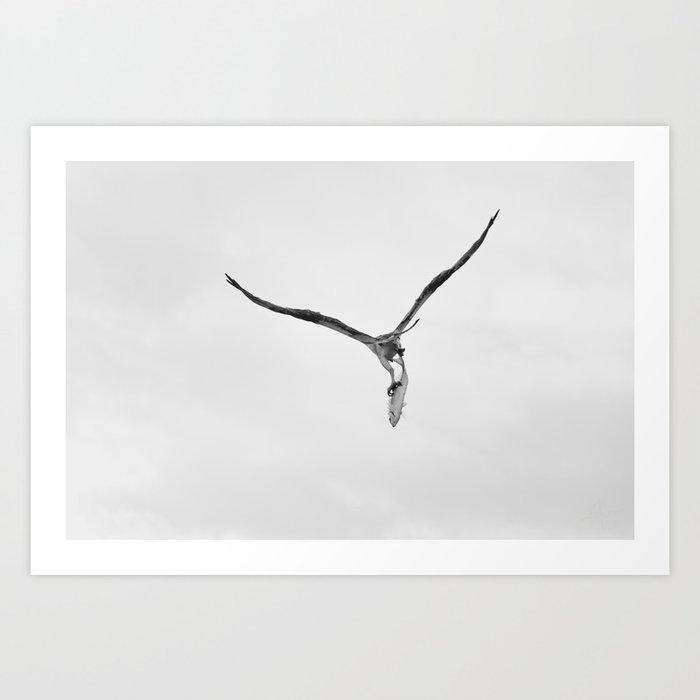 Bird of Prey Carrying Fish Art Print