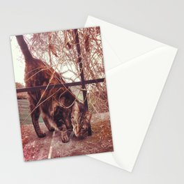 Cat in the Street Stationery Cards