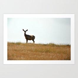 Deer No. 1 Art Print