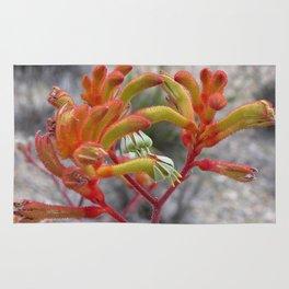 Orange Kangaroo Paw Flowers Rug
