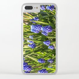 Grape hyacinths muscari Clear iPhone Case