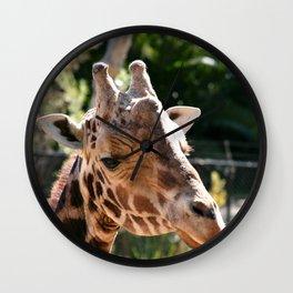 Baringo Giraffe Wall Clock
