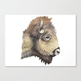 Horizontal Bison Canadian Profile Canvas Print
