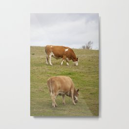Cows on a hill Metal Print