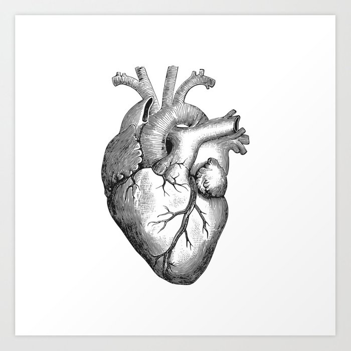 Real Anatomical Human Heart Drawing Art Print By Azza1070 Society6