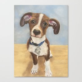 Cute Terrier Mix Canvas Print